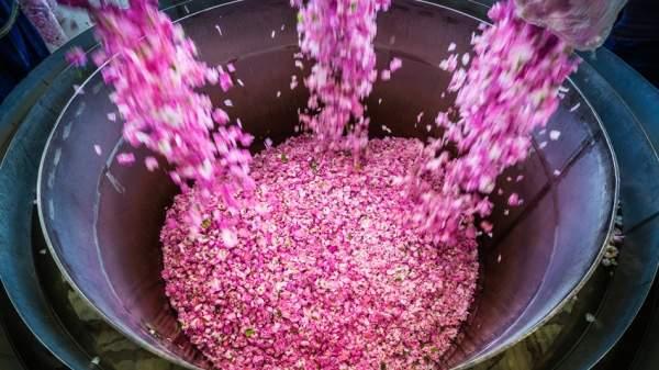 Болгарское розовое масло сохраняет свою лидерскую позицию на мировом рынке