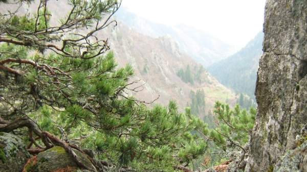 Летнее путешествие по заповеднику «Сосковчето» в горах Родопы