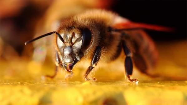 Музей пчел в Софии показывает биоразнообразие и возвращает людей назад к природе