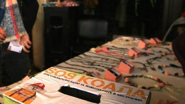«SOS Коала» − сопричастность на расстоянии в тысячи километров