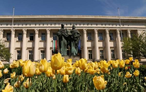 София расцветает весенними композициями из тюльпанов и фиалок